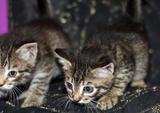 Котята-близдницы